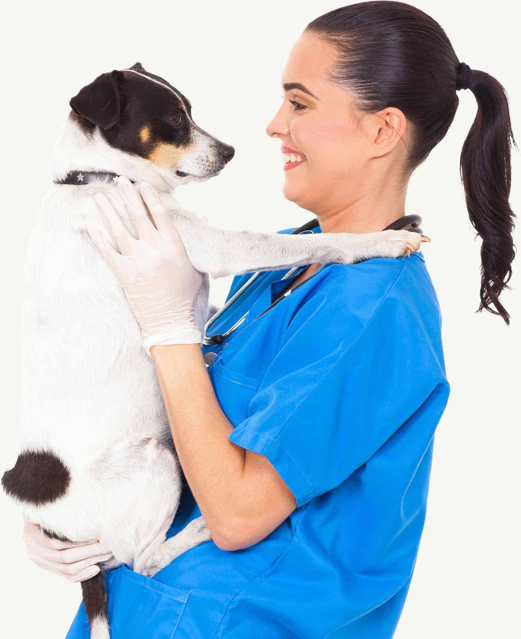 I'm a vet.
