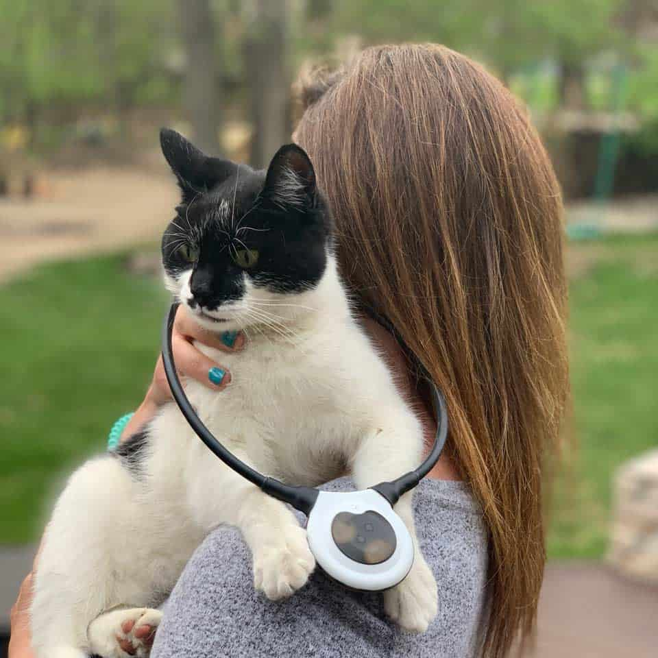 Cat with Assisi loop.